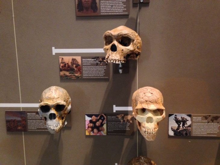 Photo of exhibit called Our Family Tree at Utah Museum of Natural History