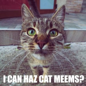 I can haz cat meems