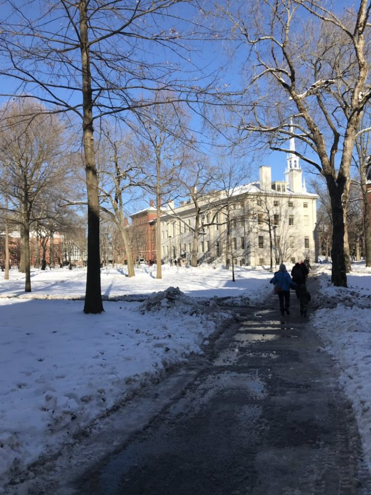 Harvard Yard, January 22, 2019. Photo by the author.